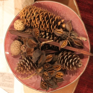 cones and seeds in bowl