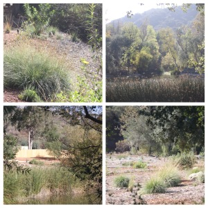 Descanso Oak Meadow garden montage | bellesidees