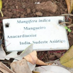 Mango label